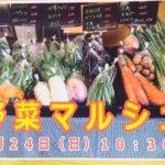 【野菜マルシェ】入荷予定の野菜はこちら~予約受付中~