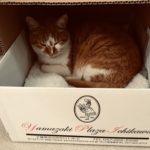 箱入り娘が、箱入り猫(=^・^=)になってます♪